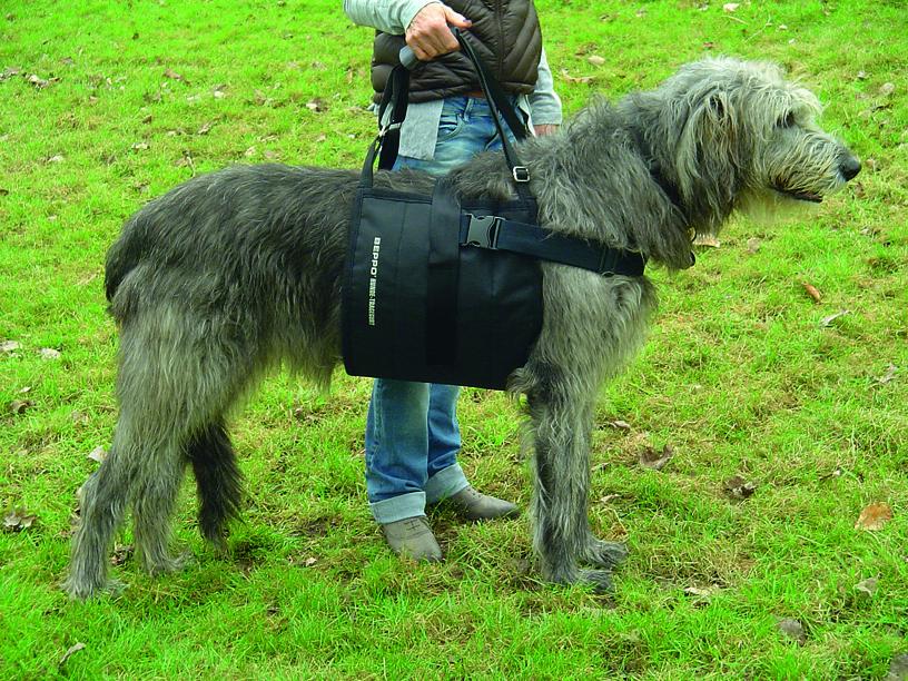 Mehr Mobilität für alte und kranke Hunde – mit Tragehilfe, Gehhilfe oder Tragegeschirr für Hunde