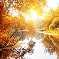 Die Parfüm-Trends für den Herbst 2014 versprühen aromatische Düfte der Natur