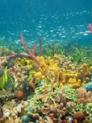 Aqua Beauty – Schönheit aus den Tiefen der Ozeane